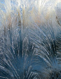Frost on the window glass under the sunlight Stock Photos