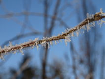 Frost Royalty Free Stock Images