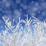 Frost winter branches and snow under blue sky Royalty Free Stock Photography