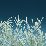 Frost winter branches - vintage retro style Royalty Free Stock Image