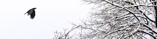 Horizontal banner of a cold and snowy winter