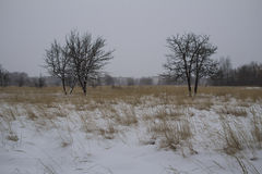 Frost winter landscape field dry grass field. Snowfall. Russia. Royalty Free Stock Photography