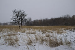 Frost winter landscape field dry grass field. Snowfall. Russia. Stock Photography