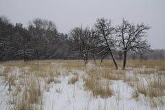 Frost winter landscape field dry grass field. Snowfall. Russia. Russia. Frost winter landscape field dry grass field. Snowfall Stock Photo