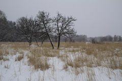 Frost winter landscape field dry grass field. Snowfall. Russia. Royalty Free Stock Photo