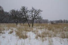 Frost winter landscape field dry grass field. Snowfall. Russia. Russia. Frost winter landscape field dry grass field. Snowfall Royalty Free Stock Photo