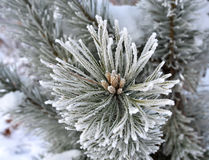 Frost Stock Photos