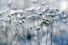 Frost winter snow Stock Image