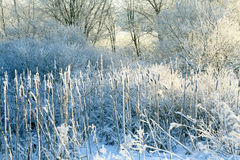 Frost, winter, snow on the old grass Royalty Free Stock Photos