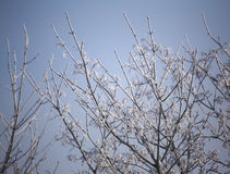 Frost On Winter Tree Stock Images