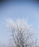 Frost On Winter Tree Stock Image