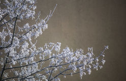 Frost On Winter Tree Royalty Free Stock Images
