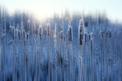 Frost-Winterschnee Stockfoto