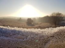 Frost on wood. Cold frosty days in the Netherlands. Dutch landscape Stock Photography