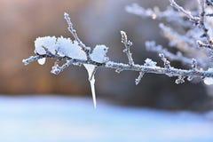Frost y nieve en ramas Fondo estacional del invierno hermoso Foto de la naturaleza congelada fotografía de archivo libre de regalías