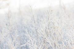 Frostabstrakt begrepp Arkivbild