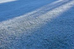 Frostad gräsbakgrund Arkivfoton