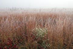 Frostad högväxt gräsprärie i dimma royaltyfri foto