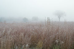 Frostad högväxt gräsprärie i dimma Arkivfoto