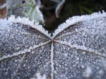 frostad leaf royaltyfri fotografi