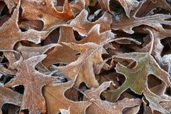 frostad leavesoak Arkivfoto