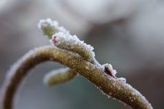 Frostad natur Arkivfoton