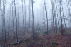 frostad skog Royaltyfria Bilder