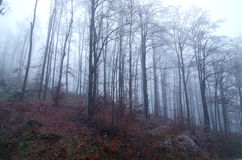 frostad skog Arkivbild