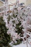 Frostad trädfilial arkivbilder