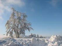 frostad tree Royaltyfri Bild