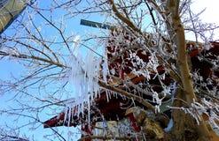 frostad tree Royaltyfri Foto