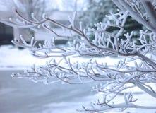 frostad tree för frunch Royaltyfri Fotografi