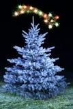 frostad tree för jul Arkivfoton