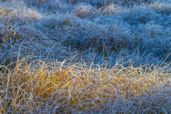 Frostade Autumn Grass Arkivbilder
