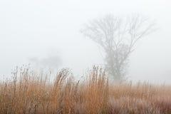 Frostade Autumn Tall Grass Prairie arkivbilder