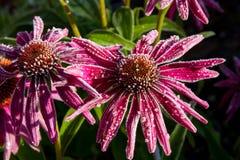 Frostade blommor Arkivfoton