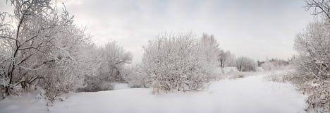 frostade liggandesnowtrees Royaltyfri Bild