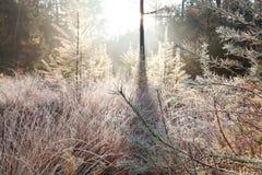 Frostade träd i höst Royaltyfri Fotografi
