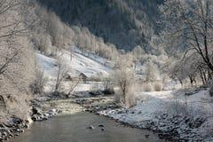Frostade träd nära floden royaltyfri foto
