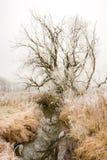 Frostade träd på floden Paar Arkivbild