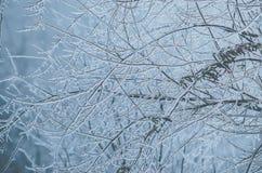 Frostade trädfilialer i vinter Fotografering för Bildbyråer