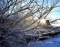 Frostade trädfilialer mot solen flod russia vita sydliga urals Ryssland arkivbild
