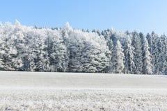 Frostade Trees Arkivfoton