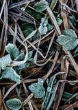 Frostade tunnlandsidor Arkivbilder