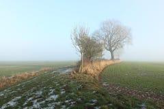 Frostade vetefält och häckträd på en dimmig dag i vinter Arkivfoto