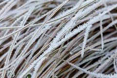 Frostade vintersidor och växter arkivbilder