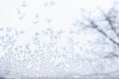 Frostat exponeringsglas på -5 celsiusa grader Arkivbilder