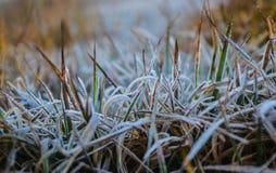 Frostat gräs Arkivfoton