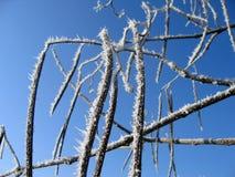 Frostauszug Stockbild