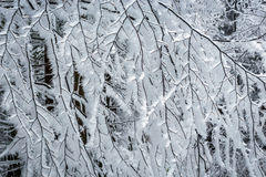 Frostbitten limbs and trees Stock Photography